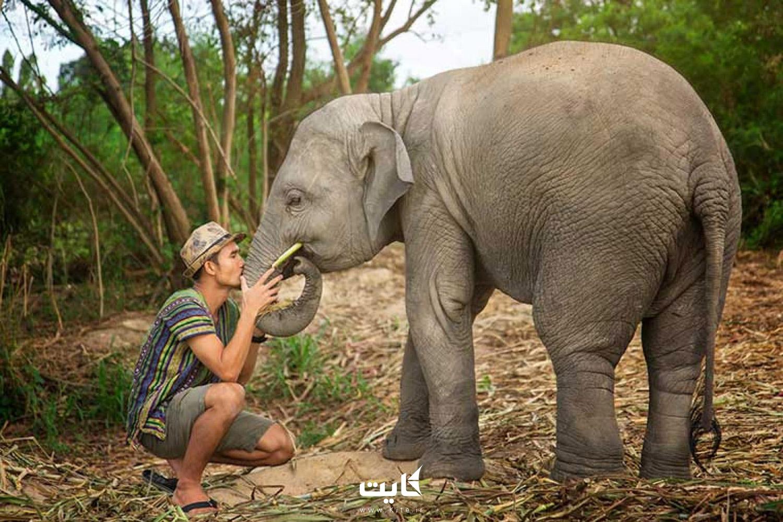 جنگل فیلهای پاتایا (Pattaya Elephant Jungle Sanctuary)