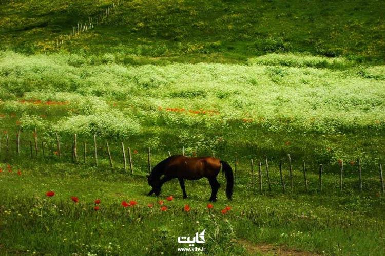 اسب در اطراف دریاچه نئور