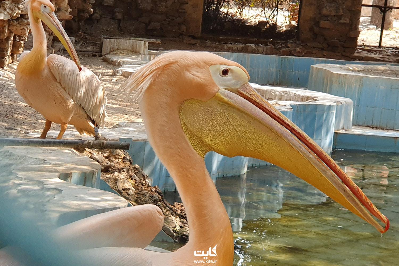 حیوانات باغ وحش های هند