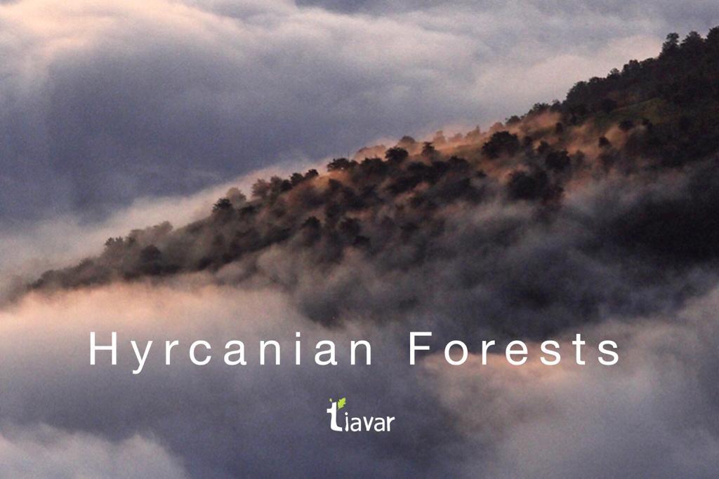 احیا جنگل های هیرکانی