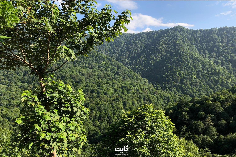 ناحیهی جنگلی لفور