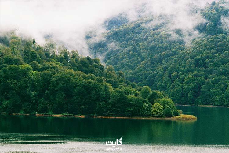 درخت ممرز قفقازی در پارک ملی گوی گول آذربایجان