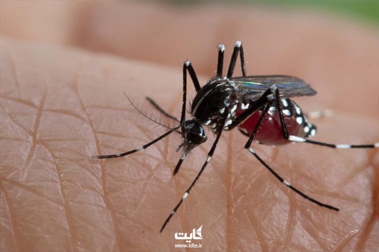پشههای حامل بیماری