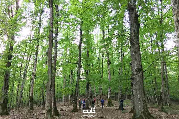 جنگل اطراف مرداب هسل