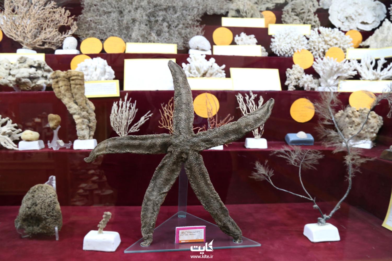 موزهی تاریخ طبیعی همدان