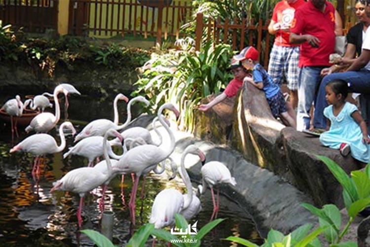 پارک حیات وحش و بهشت پرندگان لنکاوی
