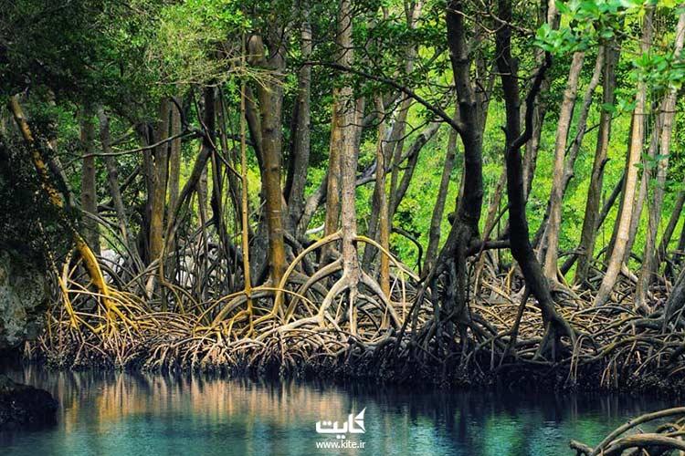 جنگل های حرا
