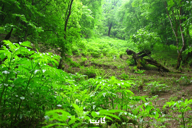 معرفی جنگل الیمستان