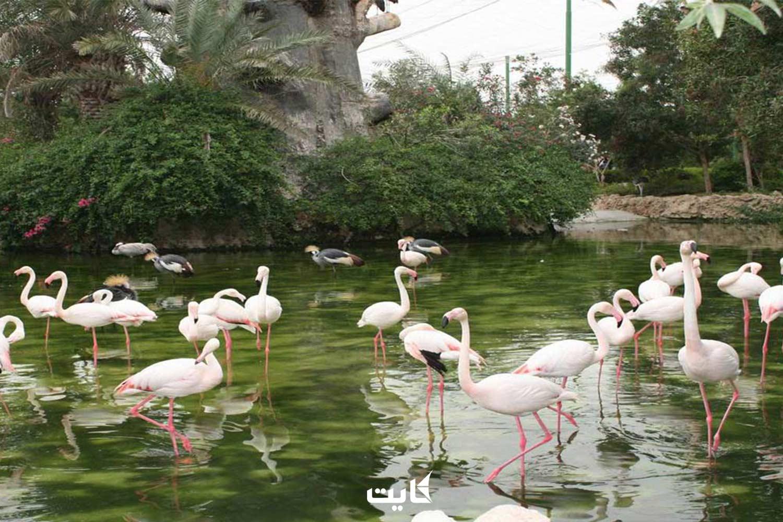 باغ پرندگان مشهد