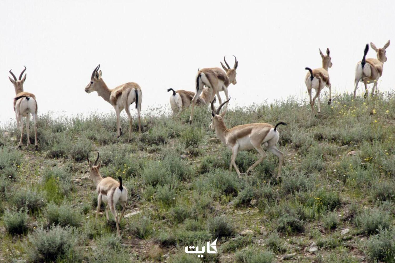 معرفی منطقه حفاظت شده سرخ آباد