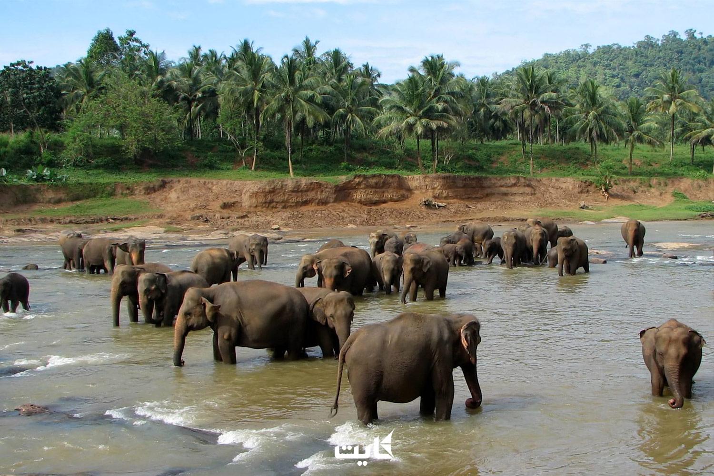 معرفی پارک Pinnawala در سریلانکا