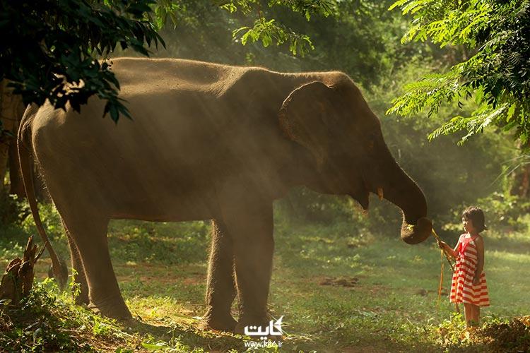 پارک فیلها