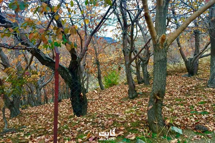 طبیعتگردی در تهران