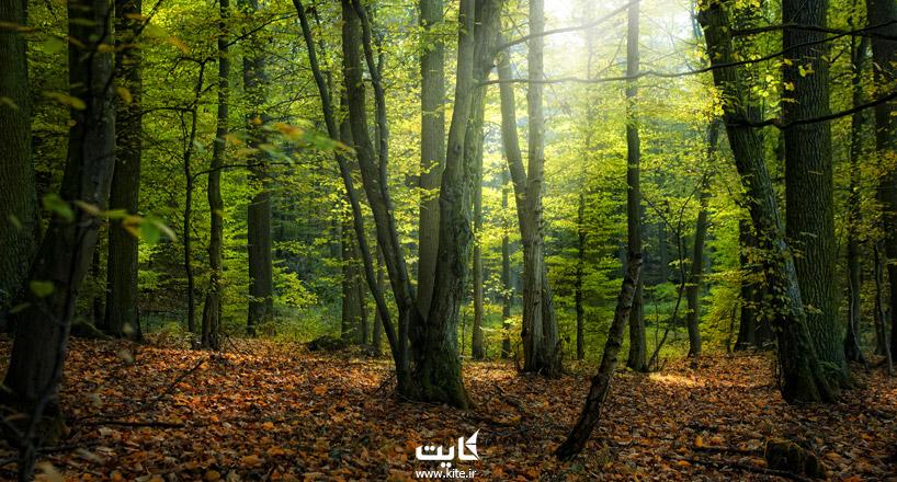 جاذبههای گلستان    معرفی 20 جاذبه برتر استان گلستان