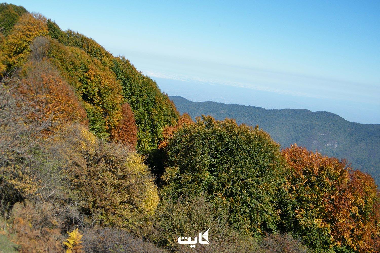 جنگل الیمستان کجاست ؟ راهنمای سفر به جنگل الیمستان